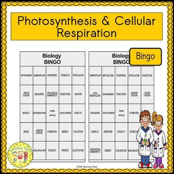 Photosynthesis and Cellular Respiration BINGO
