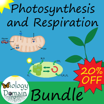 Photosynthesis and Cellular Respiration: Bundle