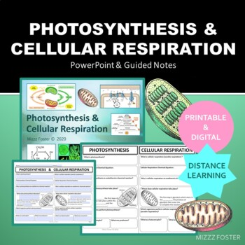 Photosynthesis and Cellular Respiration Bundle: PPT and Foldable for INB