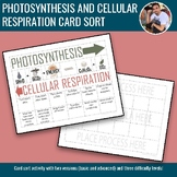 Photosynthesis and Cellular Respiration Card Sort