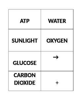 Photosynthesis and Cellular Respiration Cards