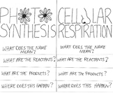 Photosynthesis and Cellular Respiration Color-able Foldable