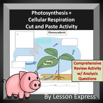 photosynthesis cellular respiration activity pdf