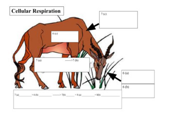 Photosynthesis and Cellular Respiration Cut and Paste Review Activity