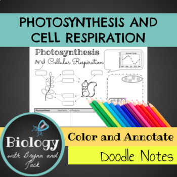 Photosynthesis and Cellular Respiration Doodle Notes