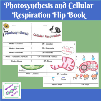 Photosynthesis and Cellular Respiration Interactive Notebook Flip Book