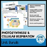 Photosynthesis and Cellular Respiration: Growing Bundle