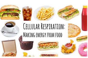 Photosynthesis and Cellular Respiration Mini-Lectures