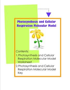 Photosynthesis and Cellular Respiration Molecular Model