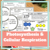 Photosynthesis and Cellular Respiration Notes