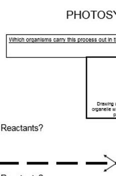 Photosynthesis and Cellular Respiration Organization Worksheet