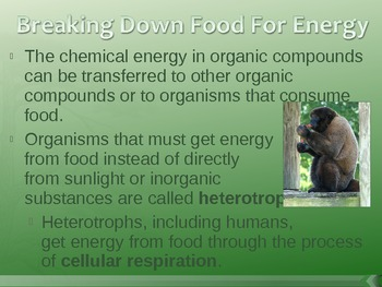 Photosynthesis and Cellular Respiration PowerPoint Presentation Lesson