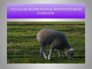 Photosynthesis and Cellular Respiration Powerpoint THE BASICS
