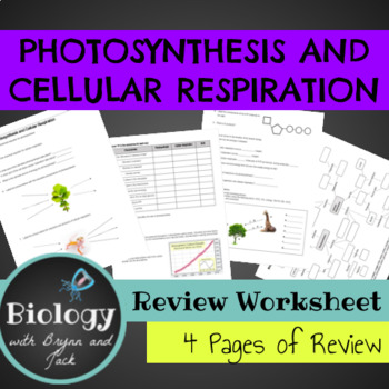 Photosynthesis and Cellular Respiration Practice