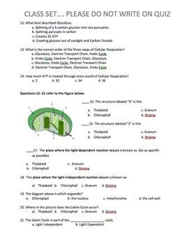 Photosynthesis and Cellular Respiration Quiz