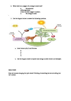 Photosynthesis and Cellular Respiration Quiz - Adapted