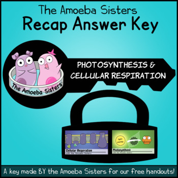 photosynthesis and cellular respiration recap answer key by the amoeba sisters. Black Bedroom Furniture Sets. Home Design Ideas