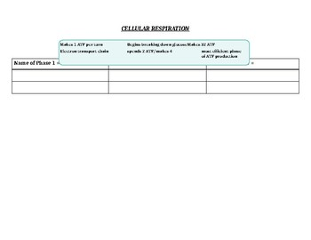 Photosynthesis and Cellular Respiration Review Charts
