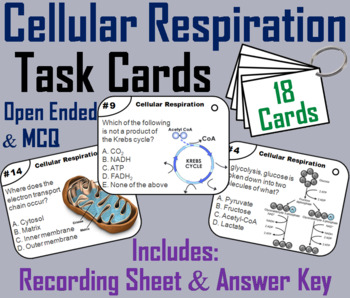 Photosynthesis and Cellular Respiration Task Cards