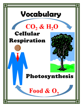 PHOTOSYNTHESIS AND CELLULAR RESPIRATION VOCABULARY