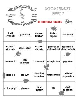 Photosynthesis and Cellular Respiration Vocabulary Bingo