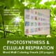 Photosynthesis and Cellular Respiration Word Wall Coloring Sheets (17 pages)