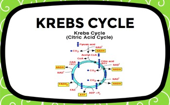 Photosynthesis and Cellular Respiration Word Wall Set