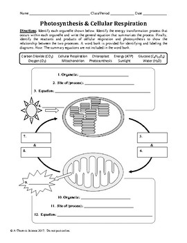Photosynthesis and Cellular Respiration Worksheet by A-Thom-ic Science