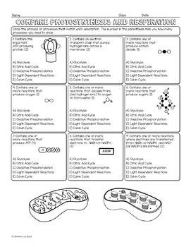 Photosynthesis and Respiration Comparison Biology Homework Worksheet