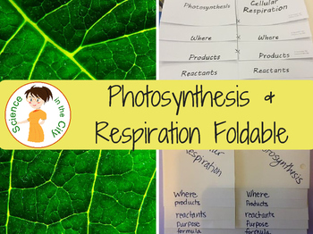 Photosynthesis and Cellular Respiration Foldable Notes