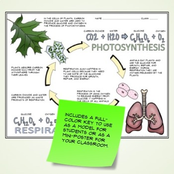 Photosynthesis and Respiration Guided Graphic Notes