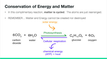 Photosynthesis and Respiration Notes