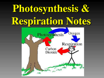 Photosynthesis and Respiration Notes PowerPoint