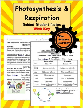 Photosynthesis and Respiration Notes Word Document