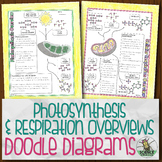 Photosynthesis and Respiration Overview Biology Doodle Diagram Notes