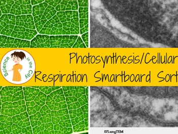 Photosynthesis and Respiration Game