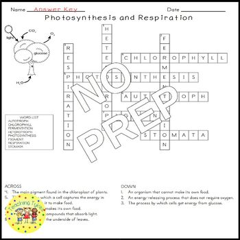 Photosynthesis and Respiration Science Crossword Puzzle Coloring Middle School