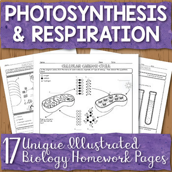 Photosynthesis And Respiration Unit Homework Page Bundle Tpt