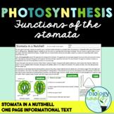 Free Photosynthesis: The Function of the Stomata