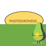 Photosynthesis and adaptations