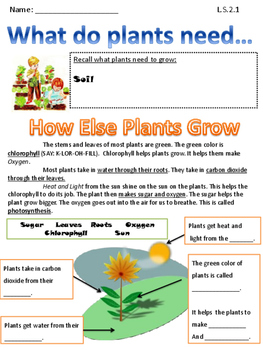 Photosynthesis for 2nd grade