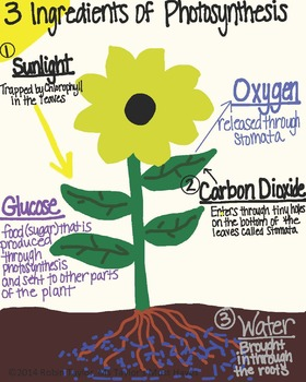 Photosynthesis Poster or Printout (for 3rd, 4th & 5th graders)