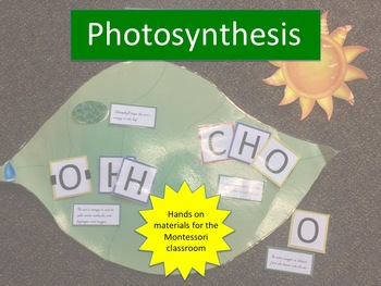 Photosynthesis for the Montessori Classroom