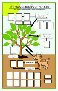 Photosynthesis in Action Activity - Grade 6, 7, 8