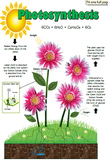 Photosynthesis is Fun: Lessons, Labs, and more!