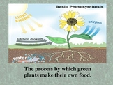 Photosynthesis powerpoint (Plants)