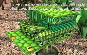Photosynthesis process in 3D Animation video- High Quality