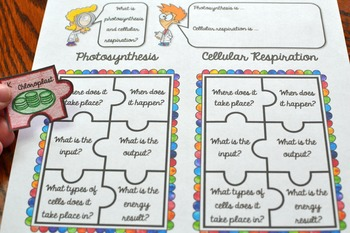 Photosynthesis vs Cellular Respiration Puzzle Activity