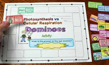 Photosynthesis vs Cellular Respiration Dominoes Activity