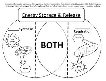 Photosynthesis Vs Cellular Respiration Venn Diagram Study Cards
